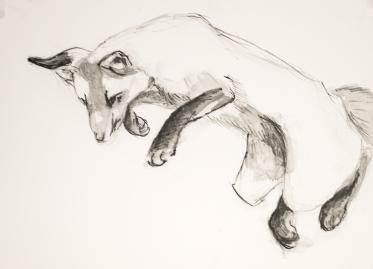 fox-pounce-8x10-terraskin