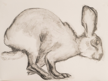 hare-8x10-graphite-on-terraskin