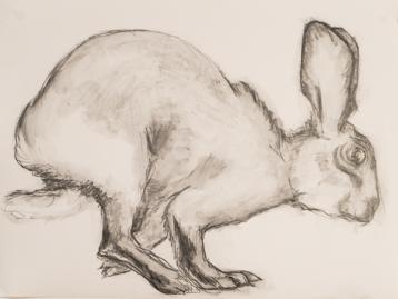 hare-8x10-graphite-on-terraskin