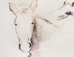 horse-watercolor-pencil