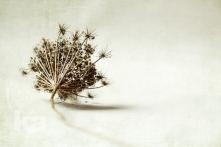 seed-head-w-texture-wtrmrk