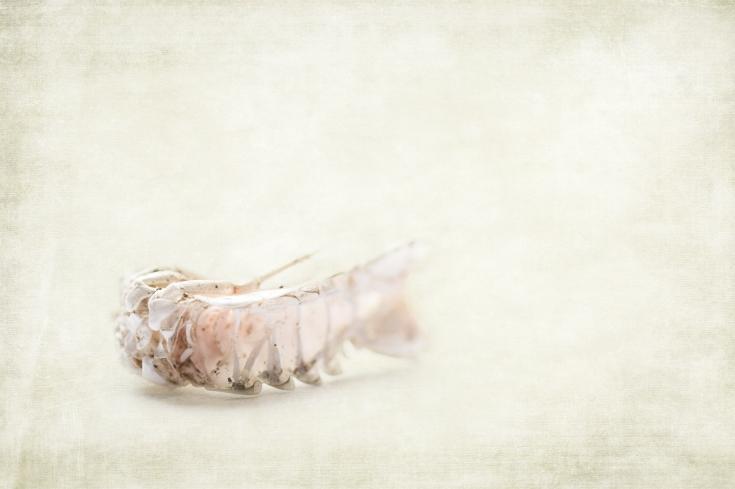 the-shrimp-w-texture2